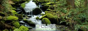 Cincuenta testimonios garantizan la excelencia de Clics Ambientales