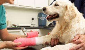 Traumatologia-veterinaria